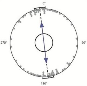 Alignment of a sampling of dogs while defecating during stable geomagnetic conditions. Photo: Hart et al. / Frontiers in Zoology