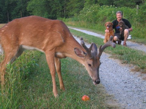 Bambi11
