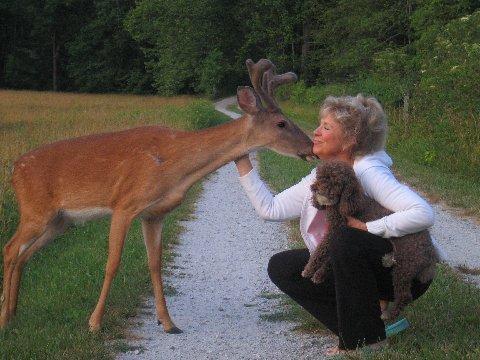 Bambi17