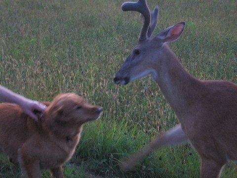 Bambi19