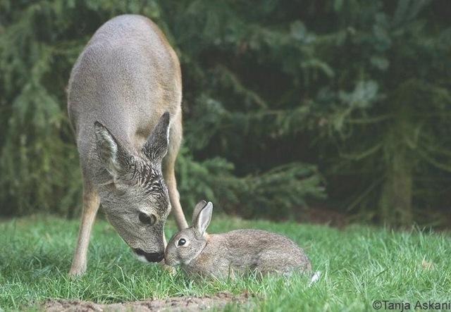 Bambi7