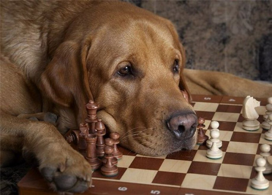 dog-playing-chess-graphic