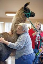 Holly Barto hugs a therapy llama at Bellingham Health and Rehabilitation Center, USA © Jen Osborne Photography