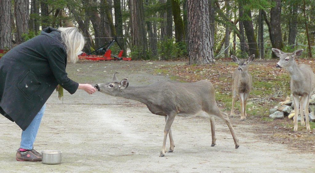 Wild deer trusting Jean.