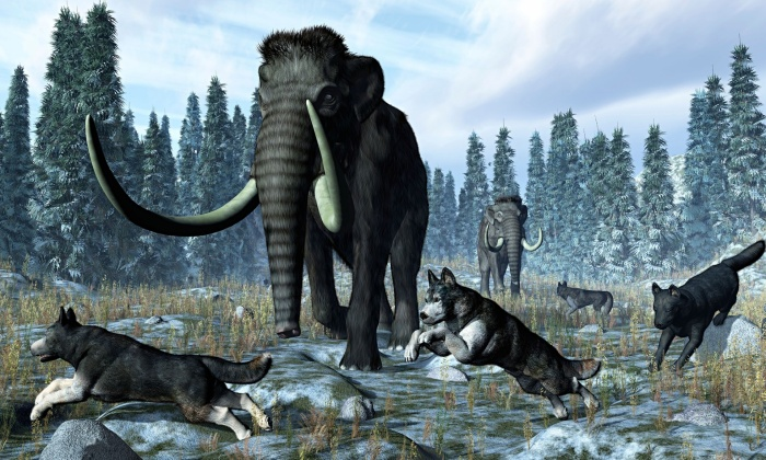 A pack of dire wolves crosses paths with two mammoths during the Upper Pleistocene Epoch. Photograph: Alamy