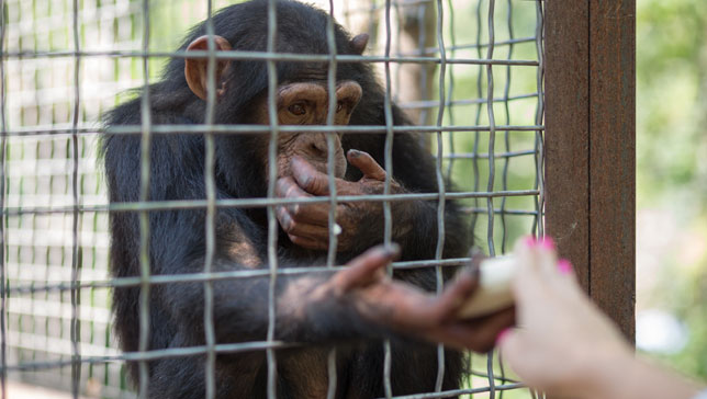 About 33 percent of people said they were 'very concerned' about the use of animals in research, and 21 percent were very concerned about zoo animals. (Photo: Pavel L Photo and Video/Shutterstock)