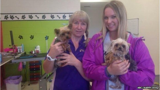 The dogs were discovered when a picture was posted of them at grooming parlour.
