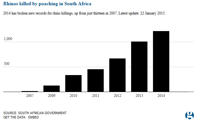 rhino-poaching-trend