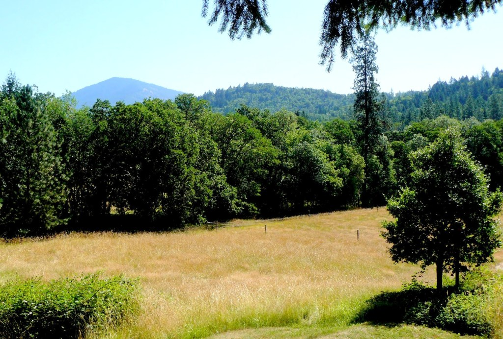 A view of our property looking out to the North-East. Our boundary is the other side of the line of trees. (Photo taken July, 2012)