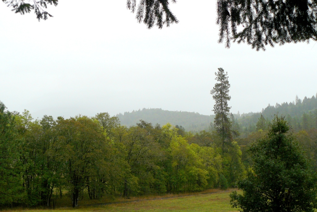 Same view but this time on a foggy Autumn day in 2013.