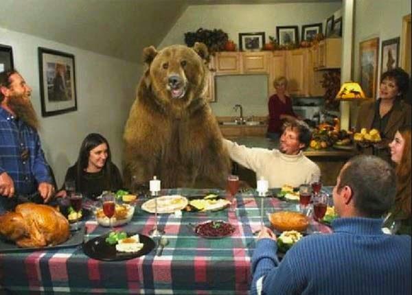 bears13