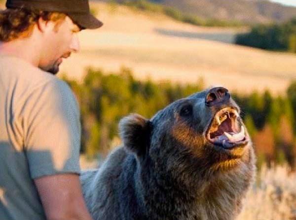 bears14