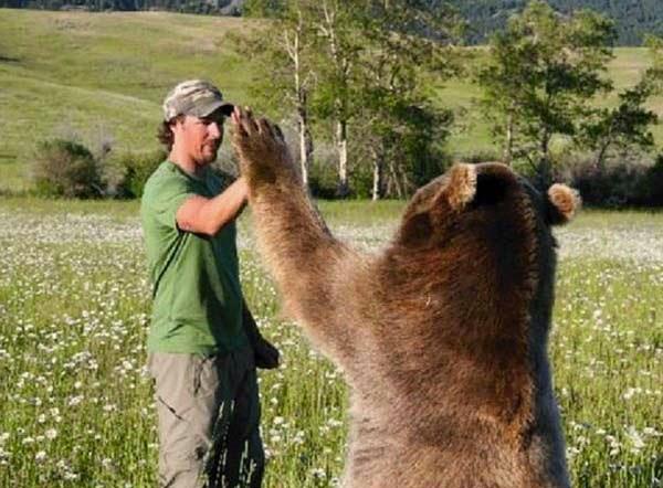 bears17