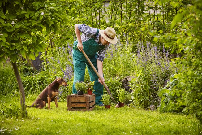 Designing your garden with your dog in mind will prevent an infinite number of headaches down the road. (Photo: upixa/Shutterstock)