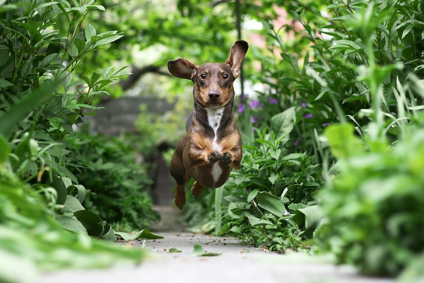 Providing pathways for your dogs will show them where they're allowed to run and will help keep them out of more sensitive areas of the garden. (Photo: Julius Elias/Shutterstock)
