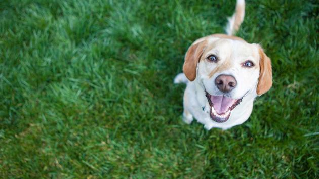 A new study explains why your dog gets so happy to see you. (Shutterstock)