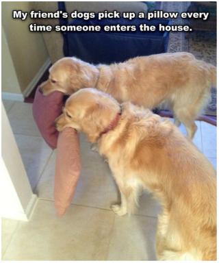 happydogs5