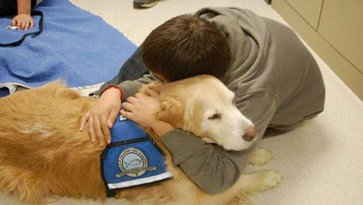 Photo: K-9 Parish Comfort Dogs/Facebook