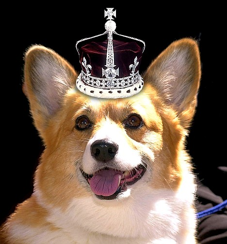 Ma'am's best friend: The Queen has owned corgis for more than 60 years. Picture seen on in the UK's Daily Mail newspaper.