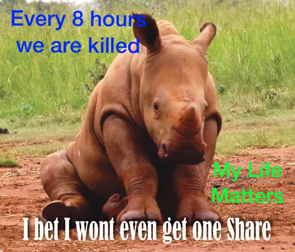 FB rhino