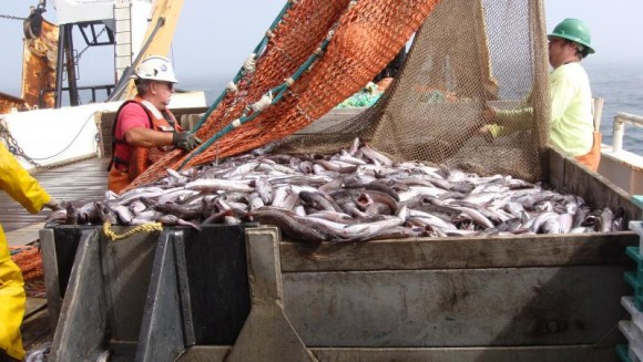 Rope trawl for midwater trawling. Photo credit: NOAA