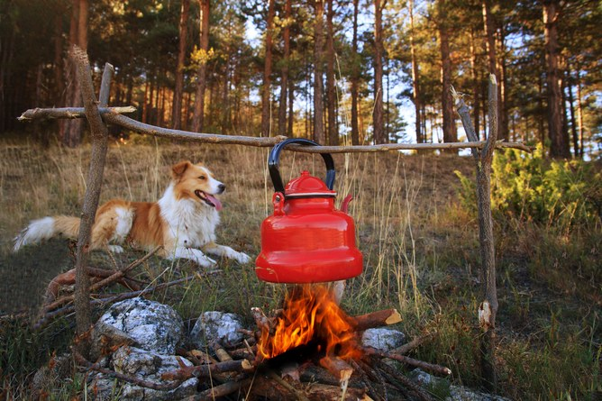 Dogs still know a good thing when they see it – warmth and food with people 'round the campfire. Camping image via www.shutterstock.com.
