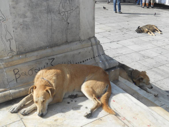 Greek dogs making sad headlines – Learning from Dogs