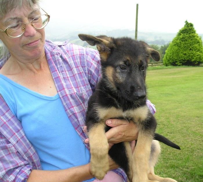 Puppy Pharaoh in the arms of Sandra Tucker of Jutone Breeders in Devon, UK. September, 2003.