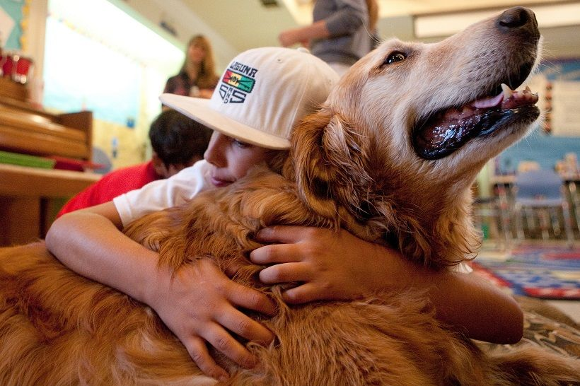 Animal-assisted therapy helps kids with autism and other developmental disabilities learn social skills. (Photo: UCI UC Irvine/flickr)