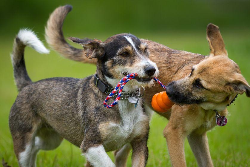 Sharing is caring! (Photo: Bildagentur Zoonar GmbH/Shutterstock)