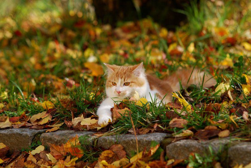 Photo: Alexandra Giese/Shutterstock