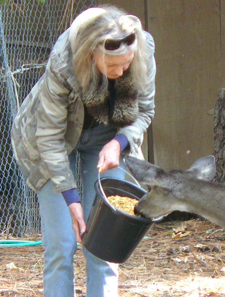One of our local deer trusting Jeannie.