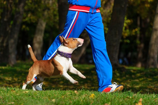 Dog owners who take their canine companions on walks tend to be trimmer and fitter than their fellow dog-less peers. (Photo: AMatveev/Shutterstock)