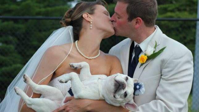 wedding dogs4