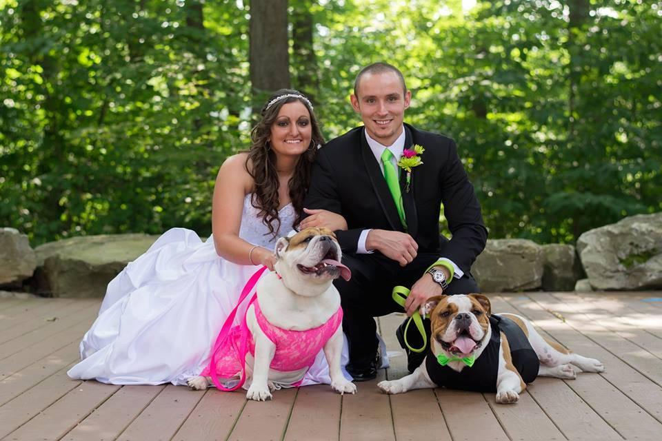 wedding dogs6
