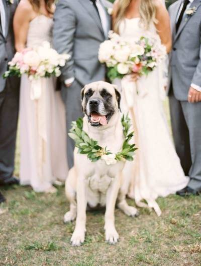 wedding dogs7