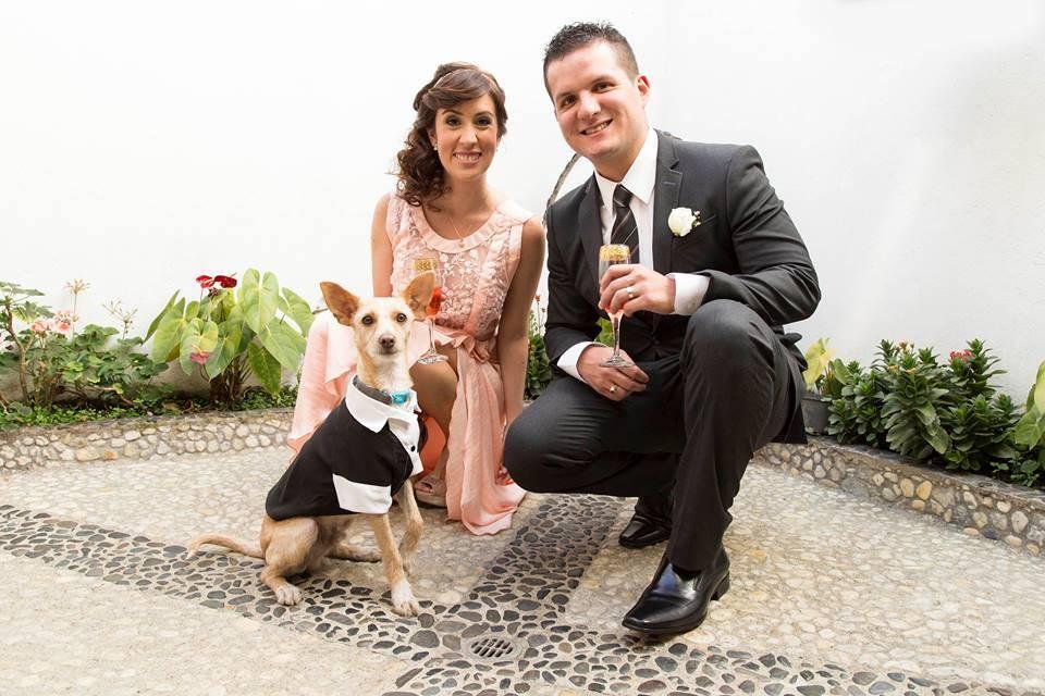 weddingdogs5