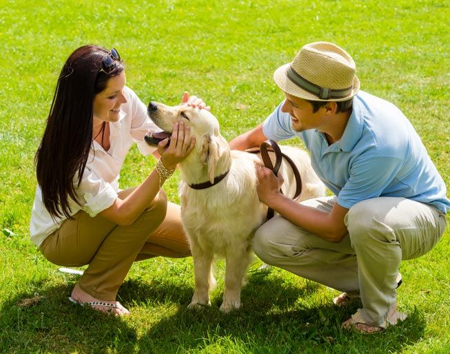 A dog can make you appear friendlier and more approachable to others. (Photo: CandyBox Images/Shutterstock)