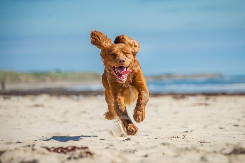 Regular exercise and outdoor time are great ways to boost a dog's quality of life. (Photo: Shutterstock)
