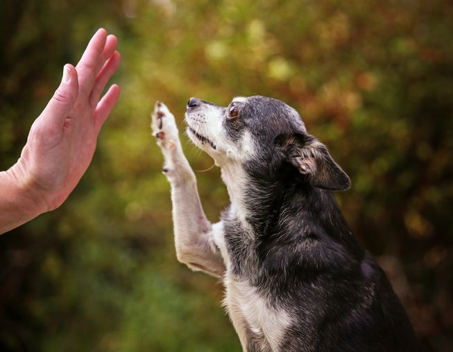 Old dogs can learn new tricks with ease! (Photo: Annette Shaff/Shutterstock)
