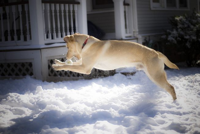 It may be made of snow, but it's just another toy ball to your dog. (Photo: b r/flickr)