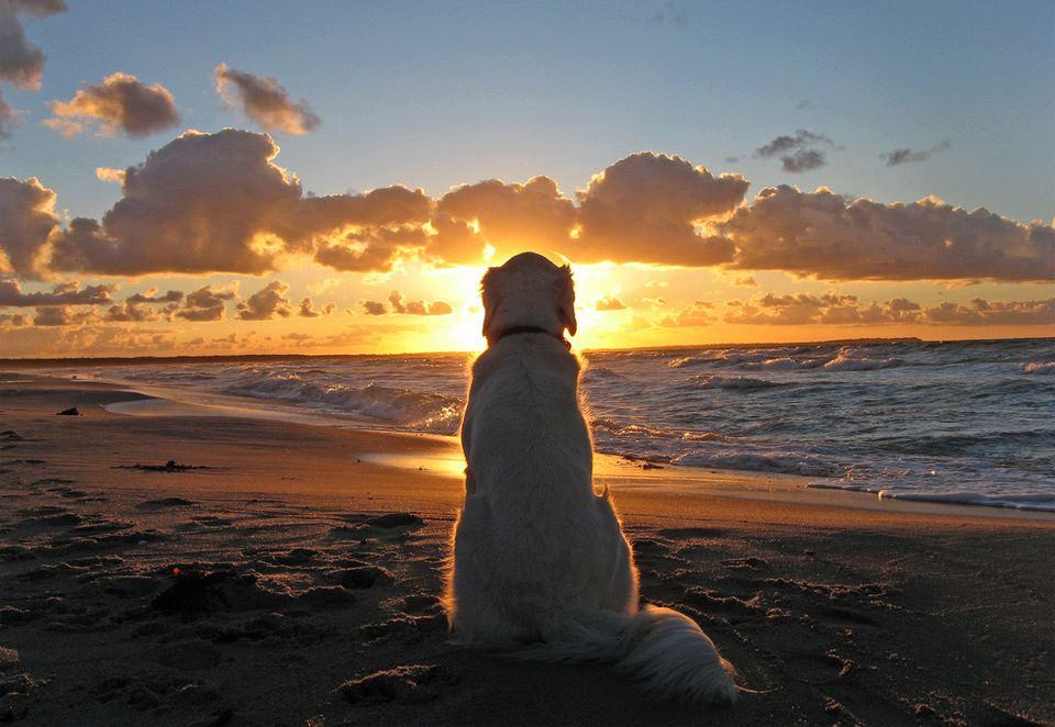 sunsetdog