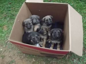 box-of-puppies