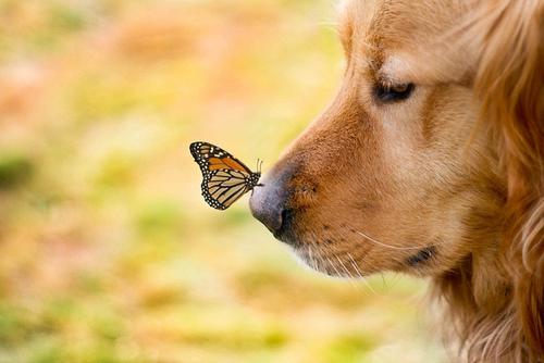 dog-nose