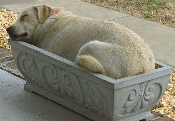 dogtired1