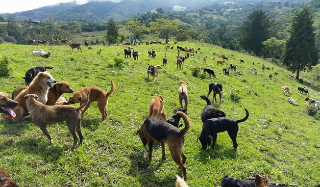 Dogs frolic in a lush green field at the Territorio de Zaguates dog sanctuary in Costa Rica. (Photo: Territorio de Zaguates)