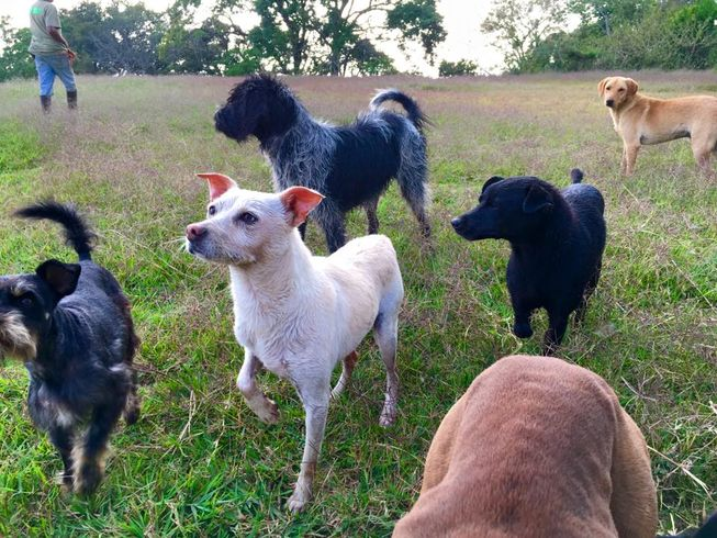 There are all kinds of mutts living at Territorio de Zaguates. (Photo: Territorio de Zaguates)