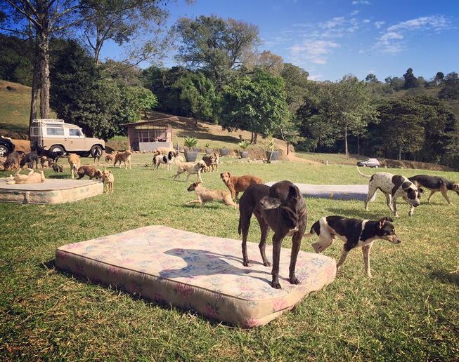 Mattresses are provided for the dogs to lounge on throughout the day. (Photo: Territorio de Zaguates)