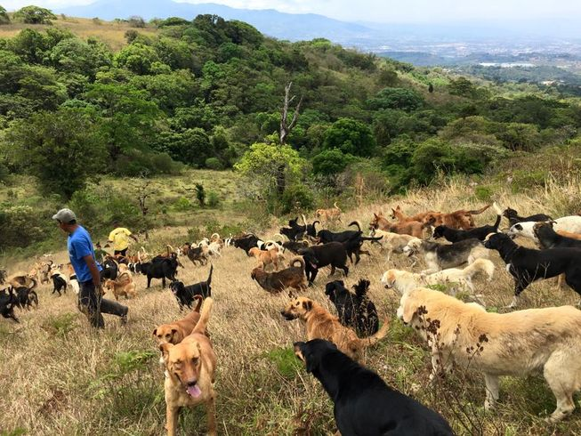 A volunteer leads the pack downhill. (Photo: Territorio de Zaguates)