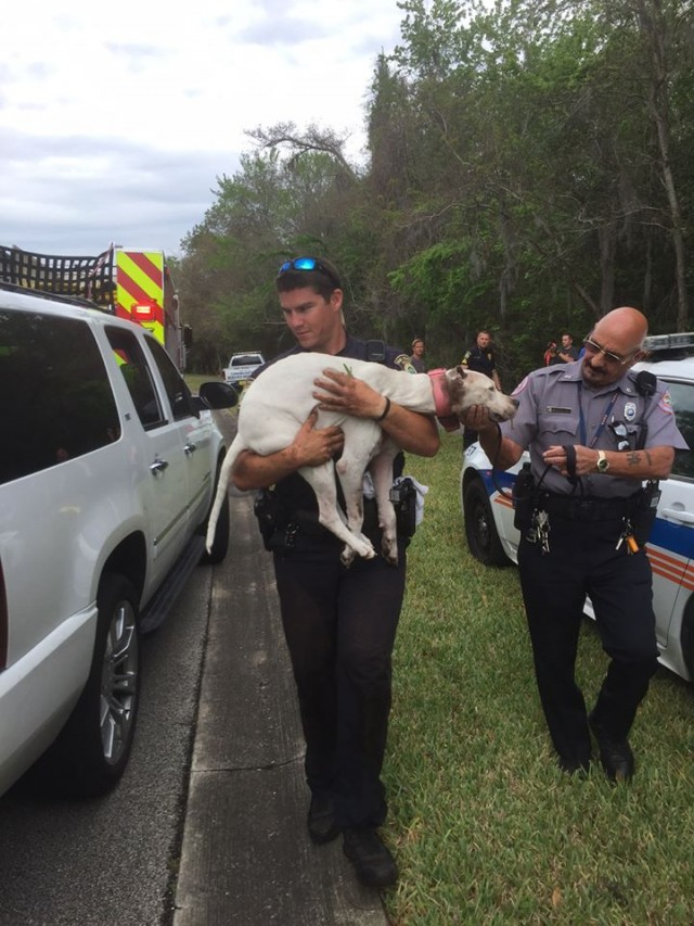 Police officers carry Jane Dog who's true identity was later revealed to be Sailor.